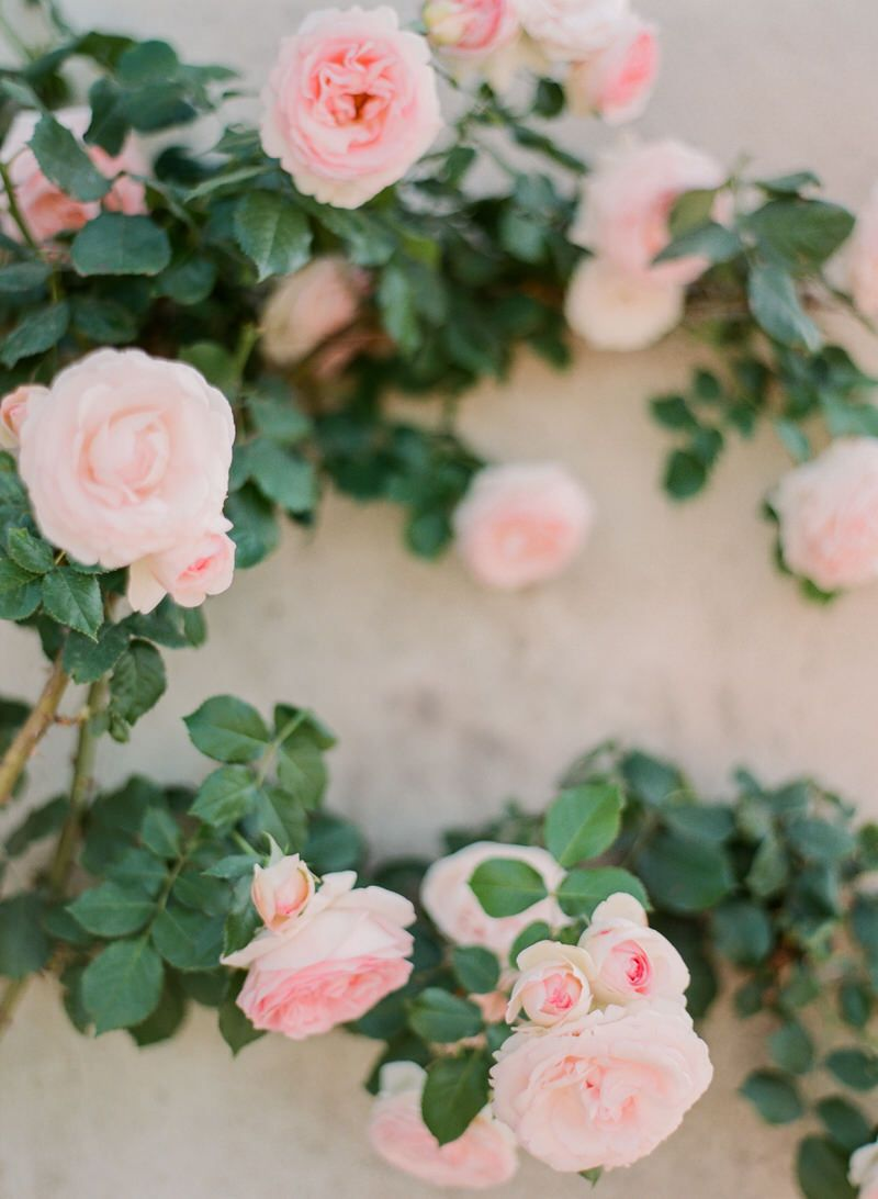 Roses At French Chateau