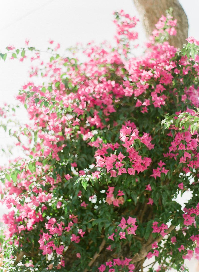 Positano flowers