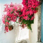 Wedding Photographer Santorini Oia