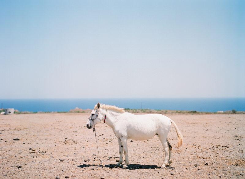 Horse in Santorini